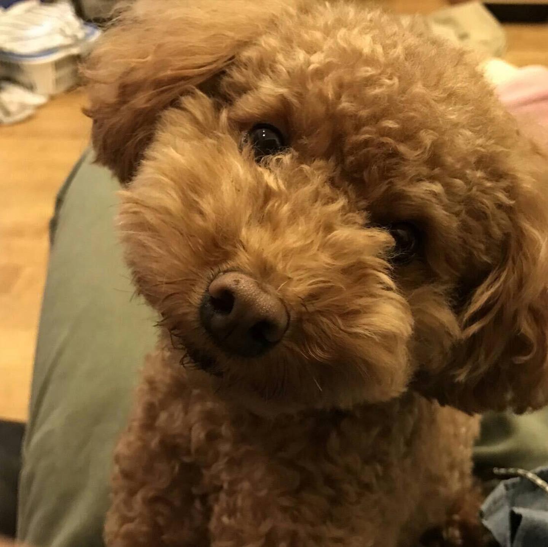 【オンライン家庭教師】愛犬について 植木です:)